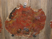 AZ Petrified Wood Table Tops