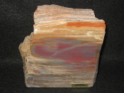 AZ Petrified Wood End cuts/paperweight