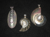 Fossil and Shell Jewelry