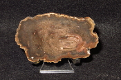 AZ Petrified Iron Wood Slab