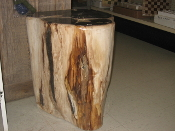 Indonesian Petrified Wood Polished Stumps