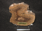 AZ Petrified Iron Wood Slabs