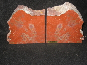 AZ Petrified Wood  Bookends