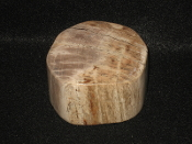 Indonesian Petrified Wood Paperweight