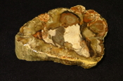 Madagascar Petrified Wood End Cut