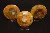 Ammonite Disks