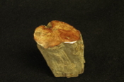 Madagascar Petrified Wood Branch