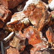 Rough Petrified Wood