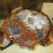 AZ Petrified Wood Table Top