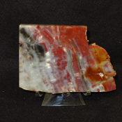 AZ Petrified Wood End cut/paperweight