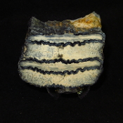Polished Mammoth Tooth Section