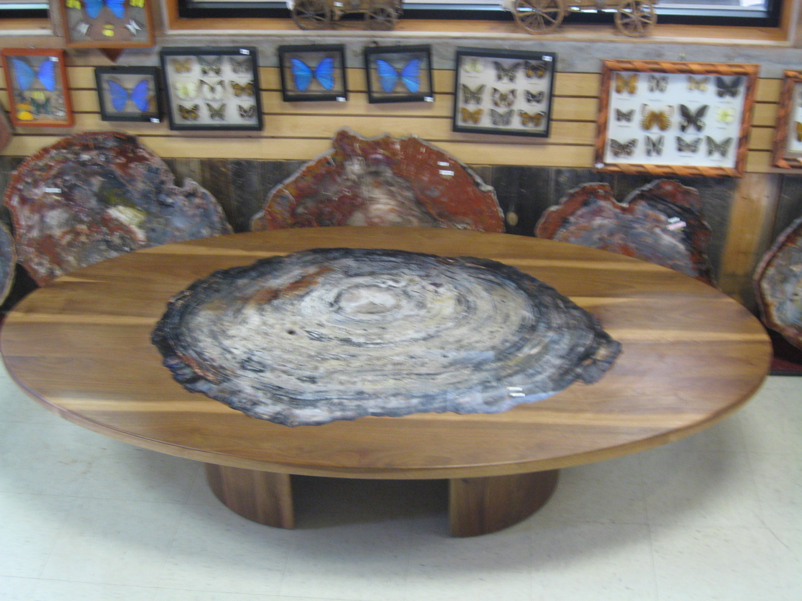 Incroyable Jim Grayu0027s Petrified Wood Co.